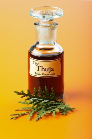 homeopatia: Thuja Occidentalis extracto de la planta y la tintura madre en una botella