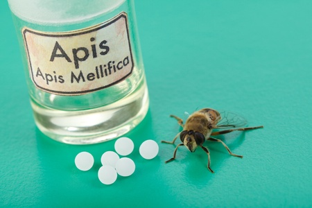 apis: Apis Mellifica homeopathic pills, poison extract and the real bee on green background