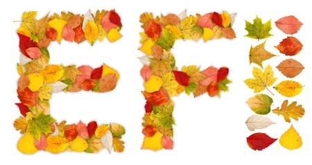 standalone: Characters E and F made of colorful autumn leaves. Standalone design elements attached Stock Photo
