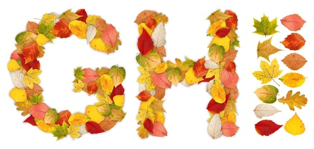 g alphabet: Characters G and H made of colorful autumn leaves. Standalone design elements attached
