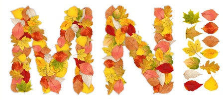 standalone: Characters M and N made of colorful autumn leaves. Standalone design elements attached