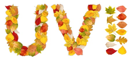 standalone: Characters U and V made of colorful autumn leaves. Standalone design elements attached