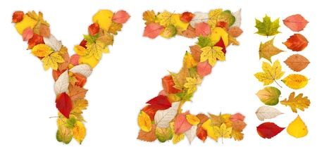 standalone: Characters Y and Z made of colorful autumn leaves. Standalone design elements attached