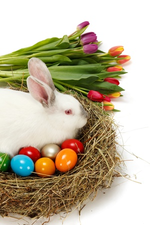 Easter bunny in nest with painted eggs and bunch of tulips photo