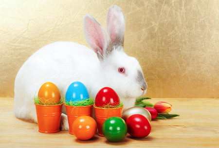 White easter rabbit with colorful painted eggs photo