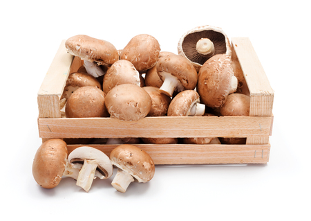 champignons: Crate with fresh cultivated brown champignons Stock Photo