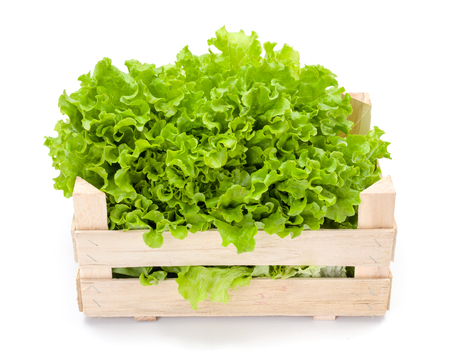 Freshly harvested green leaf lettuce in wooden crate