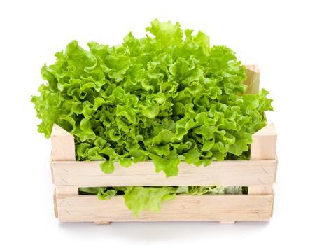 légumes verts: Laitue frisée verte fraîchement récoltés en caisse en bois
