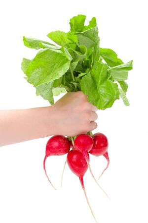 womans: Womans hand holding fresh red radish bunch