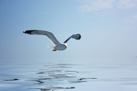firmament: flying seagulls with water reflection