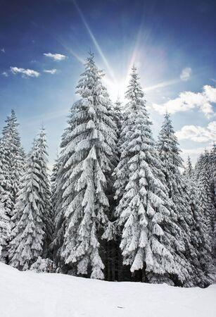 winter storm: Winter road
