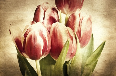 canvas on wall: Vintage tulips