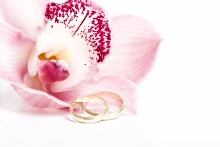 ハワイピンクの蘭、白で隔離される結婚指輪