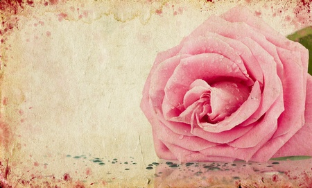 Grunge retro background with pink rose and copy space  Stock Photo