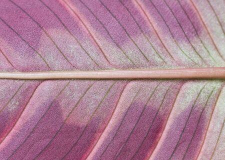 leaf texture Stock Photo - 12983617
