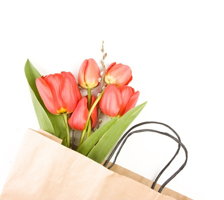 Beautiful red tulips on white background  photo