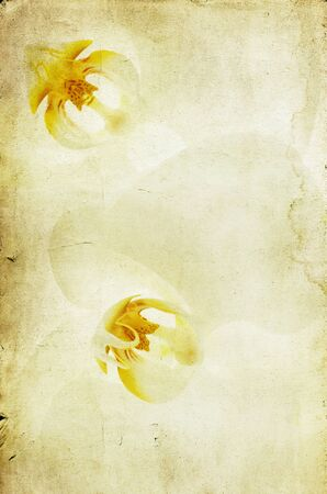 White orchid over vintage background  photo