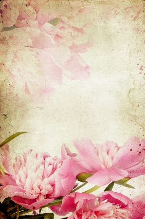 Vintage flower  peony   Stock Photo