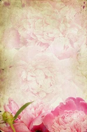 Vintage flower peony