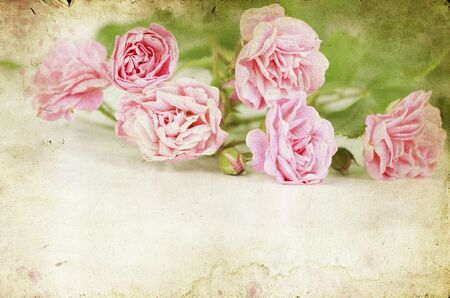 Pink roses on vintage background Stock Photo - 15090198