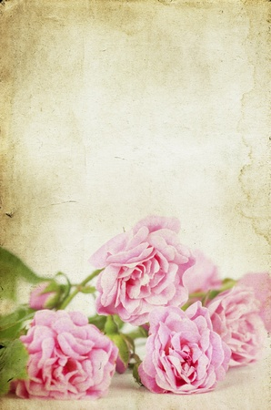Pink roses on vintage background