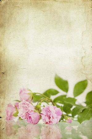 Pink roses on vintage background Stock Photo - 15090203