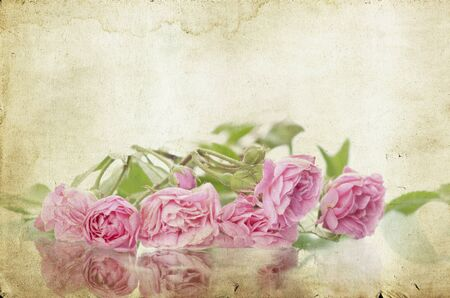 Pink roses on vintage background Stock Photo - 15090210