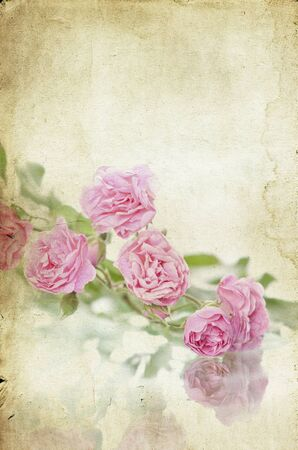 Pink roses on vintage background Stock Photo - 15090202