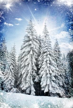 januar: Weihnachten Hintergrund mit schneebedeckten Tannen Lizenzfreie Bilder