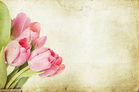 Vintage tulips Stock Photo - 17778191