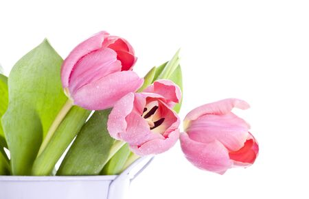 Pink tulips on white background  Stock Photo - 17778165