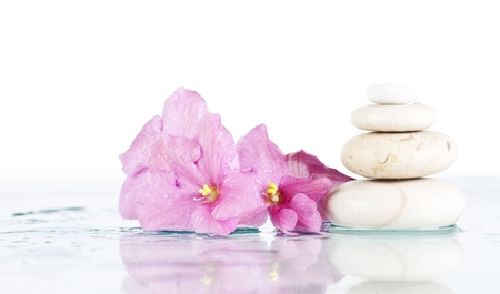 Spa stones and pink flower on white photo