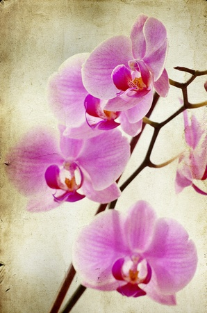 Pink orchid on vintage background  photo