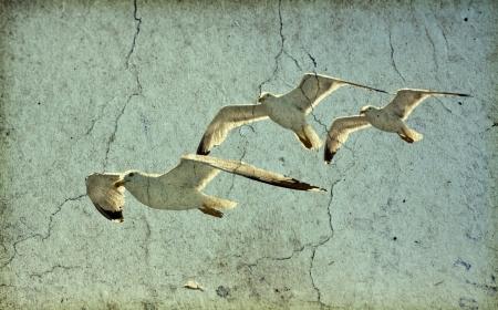 Vintage photo of flying seagulls  photo