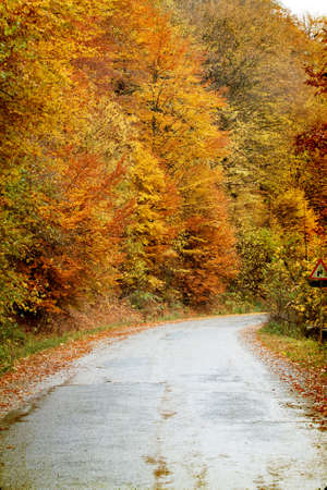 Vintage photo - Curving road in autumn forest Stock Photo - 22023264