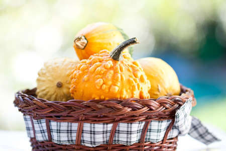 Autumn concept - pumpkins in basket and colorful autumn background photo