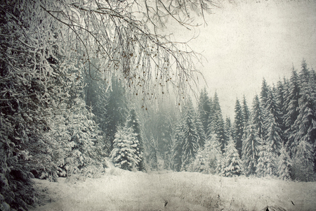 Vintage Christmas background with snowy fir trees  photo