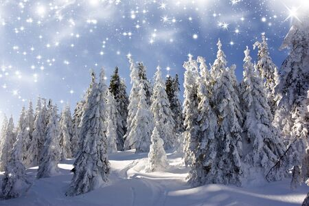 Christmas background with snowy fir trees under the glistering sky Stock Photo