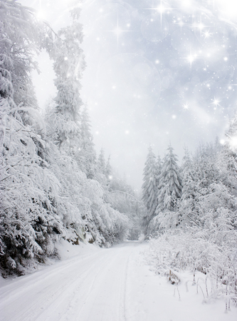 Christmas background with stars and snowy fir trees on the mountain photo
