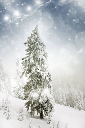 Christmas background with snowy fir trees and sky with stars