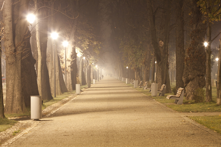 The avenue of city park,  at night in a winter fog  photo