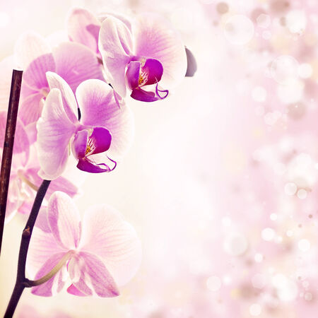 Pink orchid on spring background with colorful lights  photo