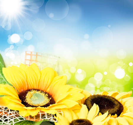 Spring concept  - Colorful spring background with sunflowers and blue sky photo