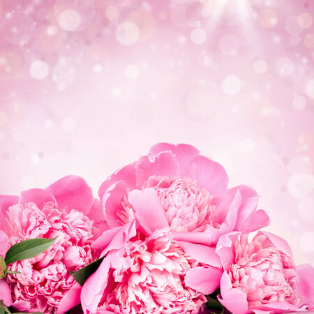 Beautiful pink roses on bokeh background photo