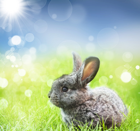 Sweet Easter bunny in the spring meadow with blue sunny sky photo