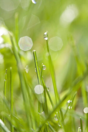 Abstract spring background of green grass with water drops photo
