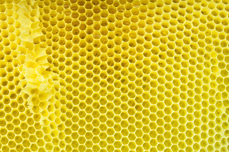 Honeycomb - cloe up texture photo