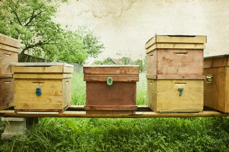 Vintage-Foto von Bienenstöcken auf dem Gebiet