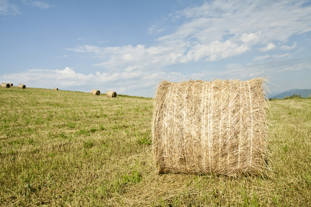 hayroll: Vintage photo of hay-roll on field after harvest Stock Photo
