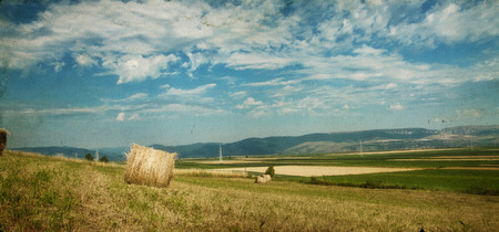 hayroll: Hay-roll on field after harvest Stock Photo